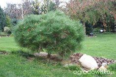 Ogrodnik Mimo Woli cd - strona 1681 - Forum ogrodnicze - Ogrodowisko