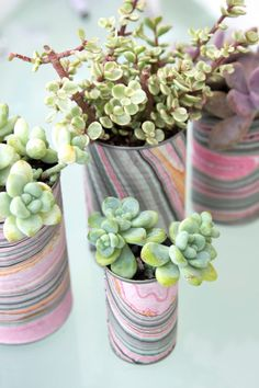 Succulents in tin can planters | http://www.hercampus.com/life/campus-life/10-diy-succulent-crafts-will-look-amazing-your-dorm-instagram