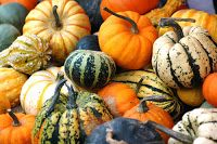 So many different varieties of winter squash and so many ways of cooking them! We've narrowed it down to 6 common squashes and a few recipes for you to try. Decorative Gourd Season, Squashes, Seasonal Food, Thanksgiving Feast, Pumpkin Soup, Heart Healthy Recipes, Gourds, Pumpkins, Fall Harvest