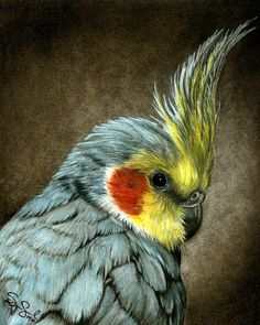 Edgar the Cockatiel colored pencil pet by AuntSophiesOddsnEnds, $20.00