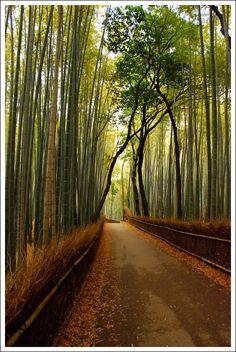 Kyoto, Japan #japan #bamboo #kyoto