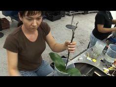 Как рождаются и живут орхидеи, перед тем как они попадают в цветочные магазины - YouTube