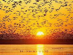 aves ao por do sol
