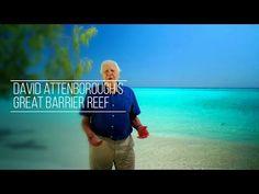 David Attenborough's Great Barrier Reef: An Interactive Journey http://attenboroughsreef.com