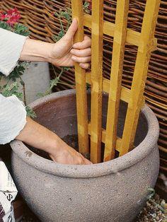 Planting a Climber : Outdoors : Home & Garden Television