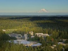 I flew my kite in the cleared soccer fields, to the left.  The Evergreen State College - Olympia, Washington