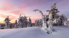 Finlandia, Laponia, Gmina Posio, Park Narodowy Riisitunturi, Wschód słońca, Zima, Wzgórze, Ośnieżone, Drzewa