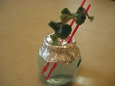 growing new african violets in water