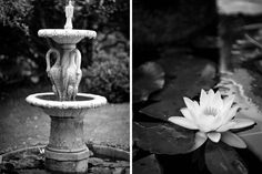 Fountain and lily at a wedding at Alberton House, Mt Albert, Auckland. Black and white.  BeSo Studios create beguiling fine art family photographs for the walls of the most discerning clients homes. We specialise in wedding and family portrait photography, and supply prints on the highest quality media, framed in beautiful conservation standard frames. We are a high end studio located in the beautiful city of Auckland, New Zealand.