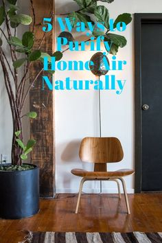 Is Your House Making You Sick? 5 Ways to Purify Home Air Naturally.