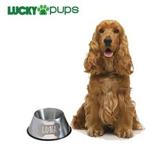 long eared dog bowls