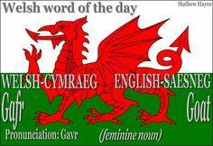 word of the day: Gafr/ #Goat http://ift.tt/20EpOjq #Welsh word of the day: Gafr/ #Goat