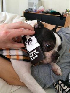 Sunday Funny animals (10:24:41 AM, Sunday 02, October 2016 PDT) – 28 pics