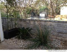 Palm, Cactus and Bamboo in a Modern Planter Mid Century Modern Landscaping, No Grass Backyard, Modern Planters, Mid Century Art, Mid-century Modern, Outdoor Living, Cactus, Bamboo, Palm