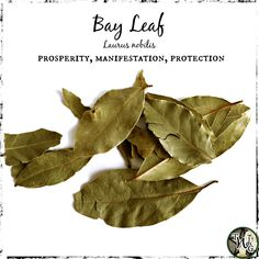 Witchcraft Herbs, Green Witchcraft, Magick, Wiccan, Magic Herbs, Herbal Magic, Herbs For Protection, Burning Bay Leaves, Laurus Nobilis