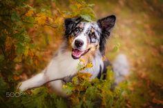 happy dog - www.kerstin-benz.de  Here you can find us too: Facebook: https://www.facebook.com/KerstinBenzFotografie Instagram: https://www.instagram.com/kerstin_benz_fotografie/