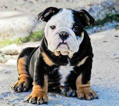 That look. #Bulldog