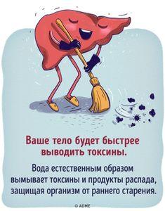 Что будет с вашим организмом, если все напитки заменить водой