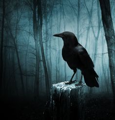 """mad-girl-asylum: The Raven by Aenea-Jones©. Leave my loneliness unbroken!—quit the bust above my door! Take thy beak from out my heart, and take thy form from off my door! Quoth the Raven """"Nevermore. Crow Art, Raven Art, Dark Fantasy, Fantasy Art, Raven Pictures, Rabe Tattoo, Quoth The Raven, Arte Obscura, Gothic Aesthetic"""
