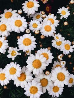 Photo by abigailhemmings19 | VSCO | http://vsco.co/vsco