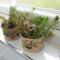 I bought these two little #portmerion dishes from the #charityshop for 50p each. They have lovely #floralillustrations of #broom and #butterflies. I potted them up with a mystery #sedum... Please do buzz in if you know it's name! They have had a little haircut water and onto a cooler windowsill for now.  #succulents #sedum #houseplant #potplant #gardener #instagardenlovers #instagardeners #garden #gardening #indoorgarden #indoorgardening #indoorplants #fabulous_thrifted_finds #thrifting…