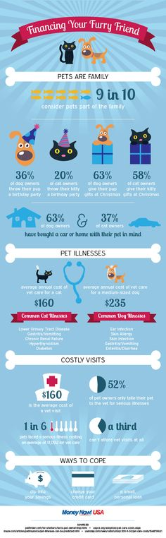 Pets are an integral part of most households in America. Check out the full infographic to see a visual breakdown of the most common costs associated with owning a pet. Puppies And Kitties, Pet Dogs, Miniature Dog Breeds, Miniature Schnauzer, Mini Schnauzer Puppies, Dog Information, Owning A Cat, Cute House, Best Dog Breeds