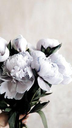 Vintage Flowers Wallpaper, Beautiful Flowers Wallpapers, Flower Phone Wallpaper, Flower Wallpapers For Iphone, Dark Flowers, Pastel Flowers, Pretty Flowers, Exotic Flowers, Deco Floral