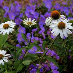 My Favorite Plant Combinations 11