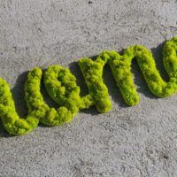 moss for home - letters and words