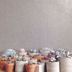 You really can't go wrong with succulents, they are probably out there with the easiest plants to take care of and it's definitely a bonus that they look so cute too!