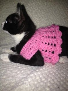 86 Best Knitted \u0026 Crocheted Cat Outfits images