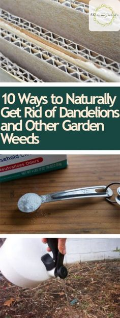 Gardening, Gardening Hacks, Pest Control Tips, How to Control Pests in Your Garden, Gardening Pest Control, Natural Pest Control, Organic Pest Control, Gardening Tips and Tricks, Natural Gardening, Popular Pin