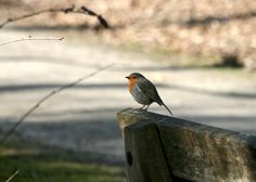 'Sitting on a bench...' by Dorri Eijsermans