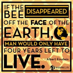 If the bee disappeared off the face of the earth, man would only have four years left to live. - Albert Einstein  They are disappearing because of the overuse and abuse of herbicides and insecticides on commercially farmed crops....go organic, Save the Bees!