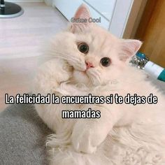 "65 Me gusta, 0 comentarios - Gatos Cool (@gatoscooloficial) en Instagram: "". . . . #memesdegatoscool #gatoscool😸 #gatos_cool #felicidad #lafelicidad"" Gatos Cool, Live In The Present, Cats, Happy, Animals, Instagram, Happiness, Gatos, Animaux"