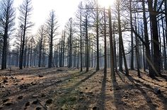 Living on Earth: Land On Fire