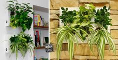Réaliser un cadre végétal! Voici 16 idées pour vous inspirer…