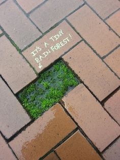 Funny pictures about A Tiny Forest. Oh, and cool pics about A Tiny Forest. Also, A Tiny Forest photos. Street Art, Street Style, Environmentalist, Guerrilla, Good Vibes Only, Funny Pictures, Random Pictures, Funny Memes, Hilarious