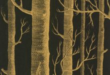 Woods in black and gold.