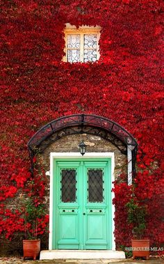 Doors Designs, Awesome Main Door Designs Also Windows Wall Flower Color Red And House Plants And Vase Lights With Door Color Blue Bright Beautiful: The Perfect Front Door Designs Choice To Make Your Home Looks Great