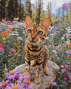 The rare and Beautiful cat flower . - Tap the link now to see all of our cool cat collections!