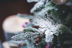 Merry Christmas! #christmas #giftshop  #flychord