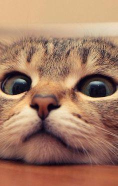 Cats :) I think I need your help mom.