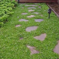Creeping Speedwell Ground Cover Seeds (Veronica Repens) - Under The Sun Seeds - 1 Ground Cover Seeds, Low Growing Ground Cover, Garden Shrubs, Garden Plants, Landscaping With Rocks, Backyard Landscaping, Landscaping Ideas, Landscaping Software, Clover Lawn