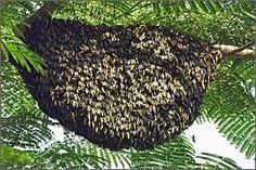 Resultado de imagem para mel e seus remedios