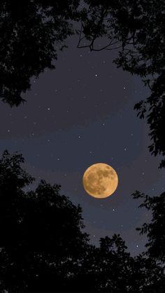 Night Aesthetic, Nature Aesthetic, Aesthetic Images, Aesthetic Backgrounds, Aesthetic Wallpapers, Moon Moon, Dark Moon, Moon Art, Night Sky Photos
