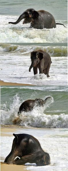 Watching the joy this baby elephant is experiencing simply delights me!