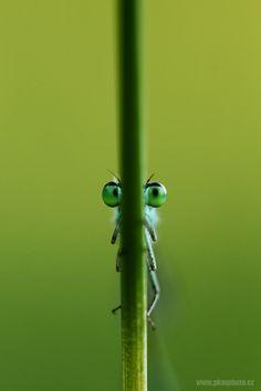 Watching you by Peter Krejzl -