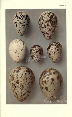 birds_parts_eggs-03452 - 027 Eggs, Birds, Digital, Food, Meal, Egg, Bird, Essen, Hoods