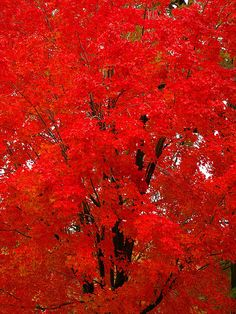 Vivid Red. Astounding colors created by nature